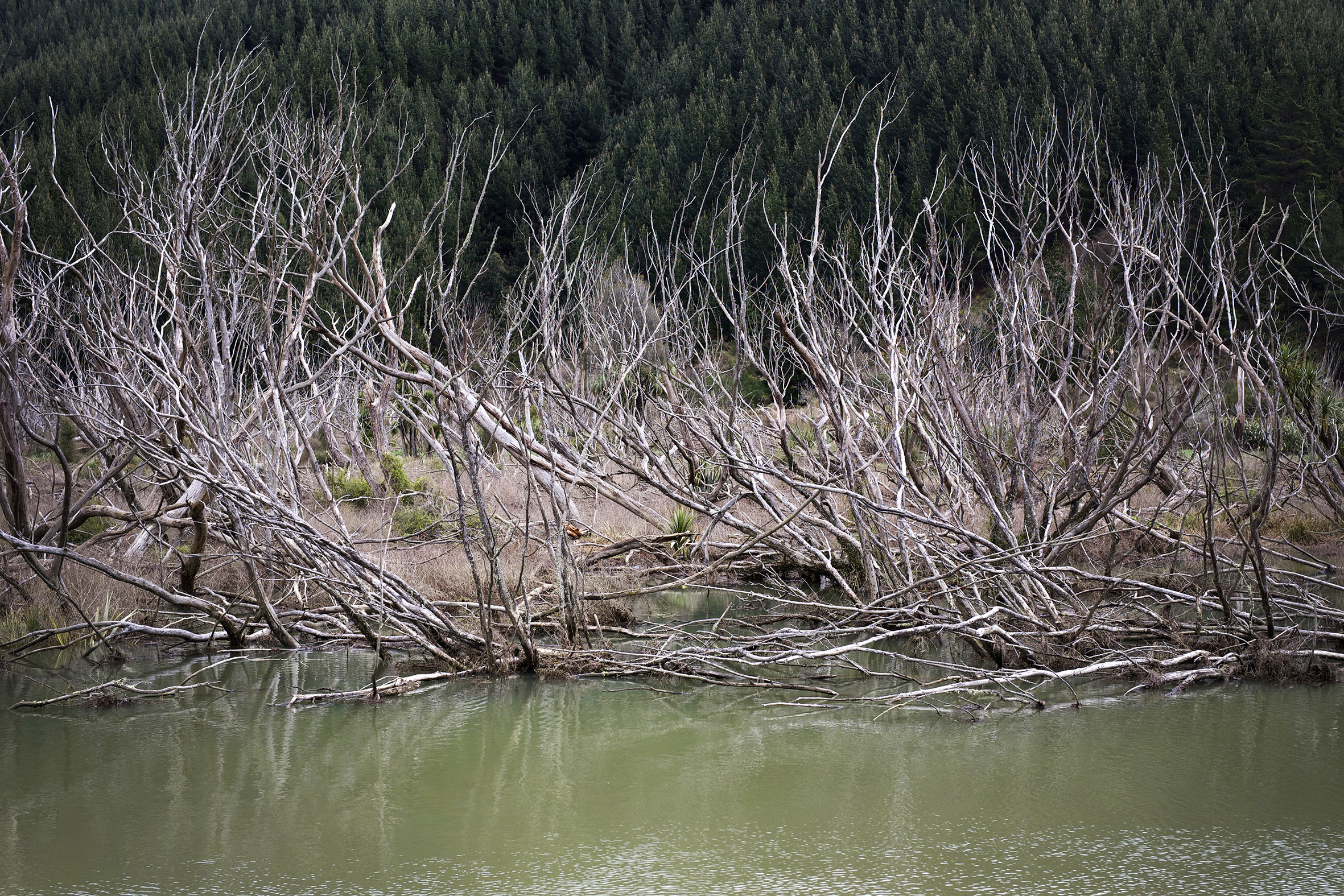 NZ sticks in water.jpg