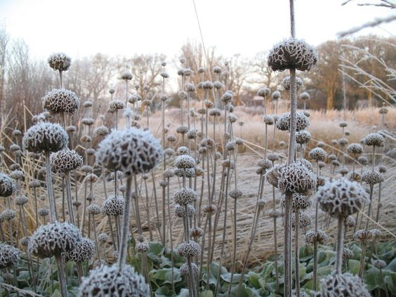 winter seedheads.jpg