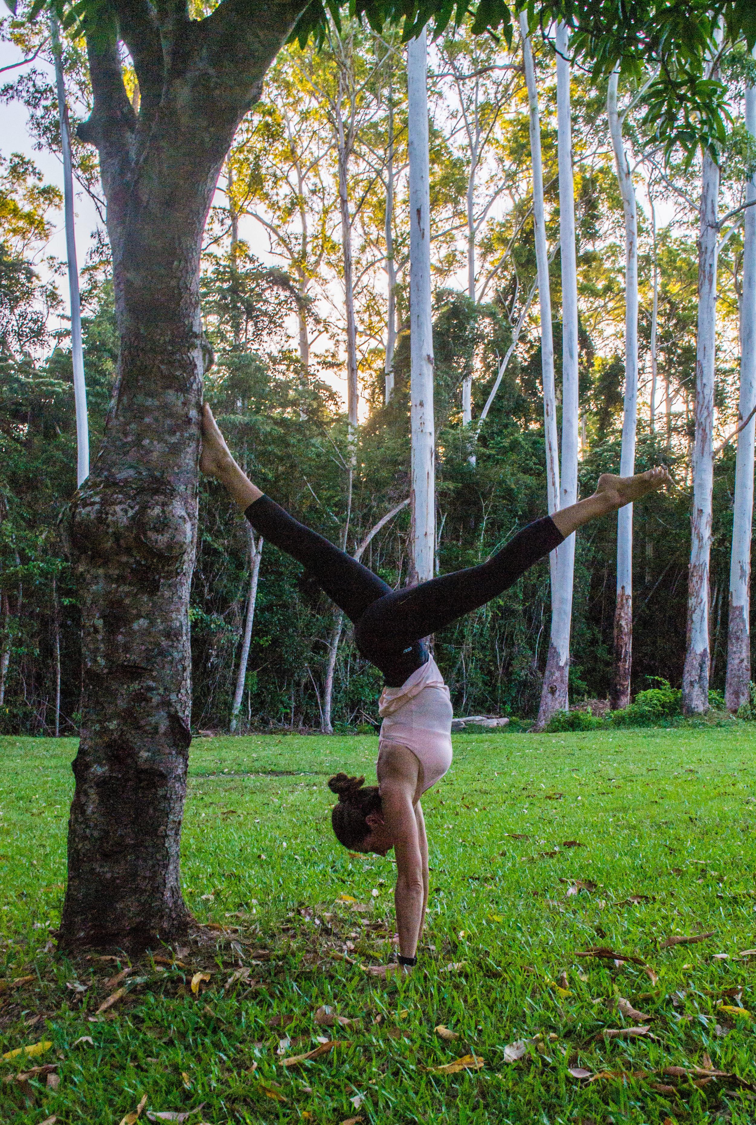 handstand up tree.jpg