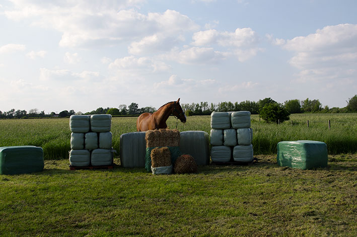 horse-haylage-edit.jpg