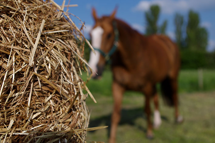 horse-hay-top-grass-haylage.jpg