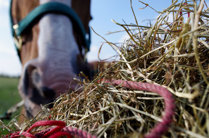 horse-hay-top-grass-haylage-edit.jpg