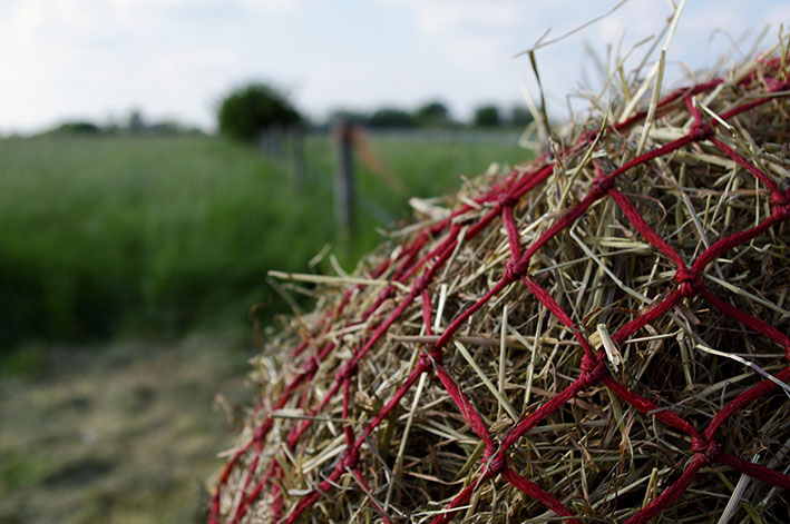 hay-and-field-top-grass-haylage-edit.jpg
