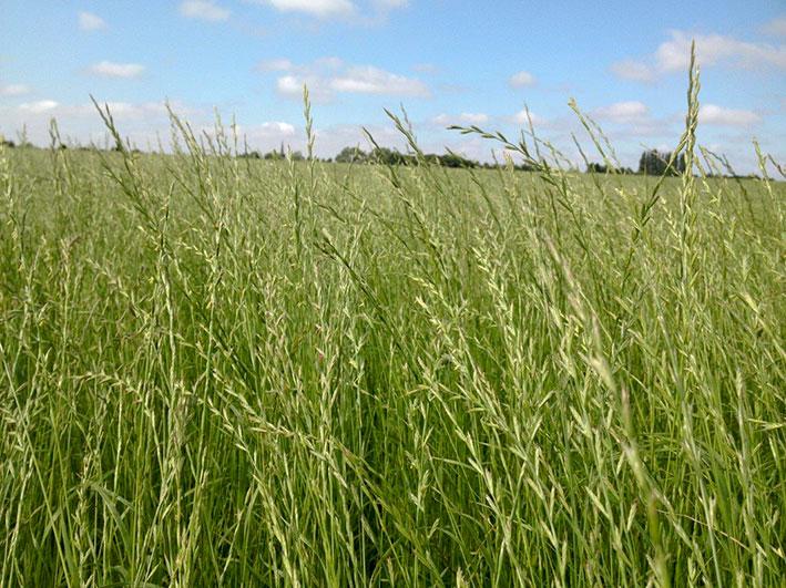 hay-haylage-fields-top-grass-haylage-edit.jpg