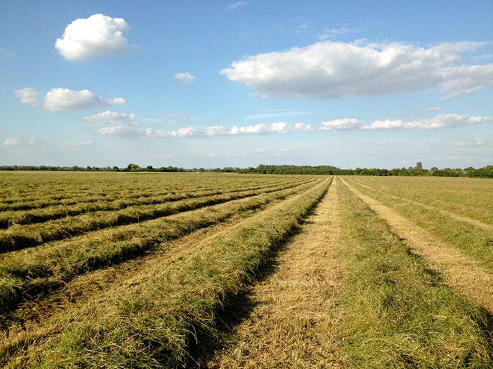 cut-haylage-fields-top-grass-hayalge-edit.jpg