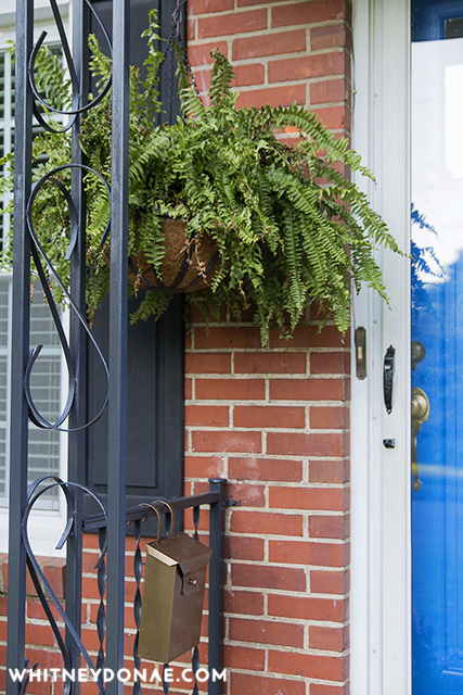 How To Repot Your Ferns Into Pretty Hanging Baskets