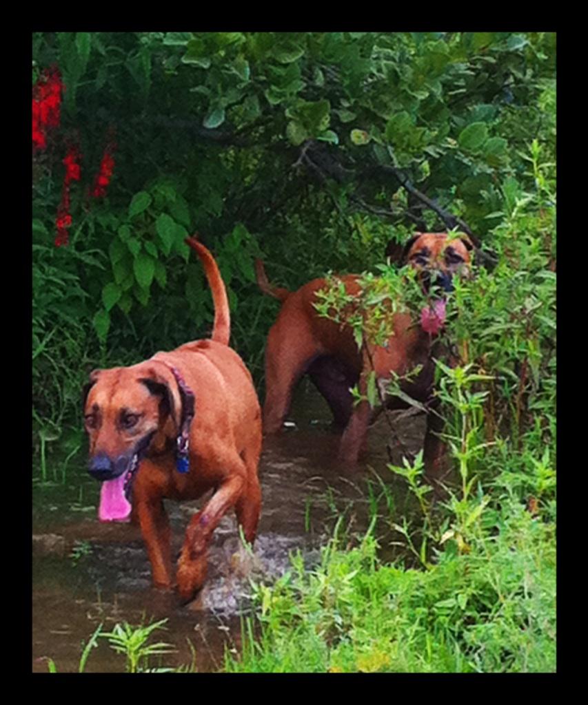 Kayla & Brazlow