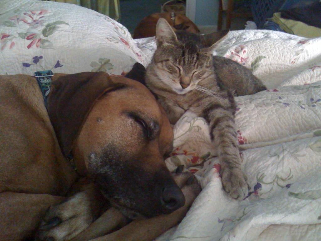 Brazlow & Archie
