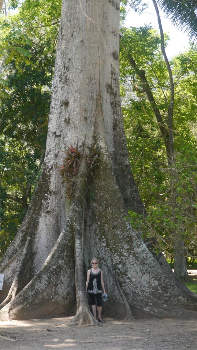 TreeGiant.jpg