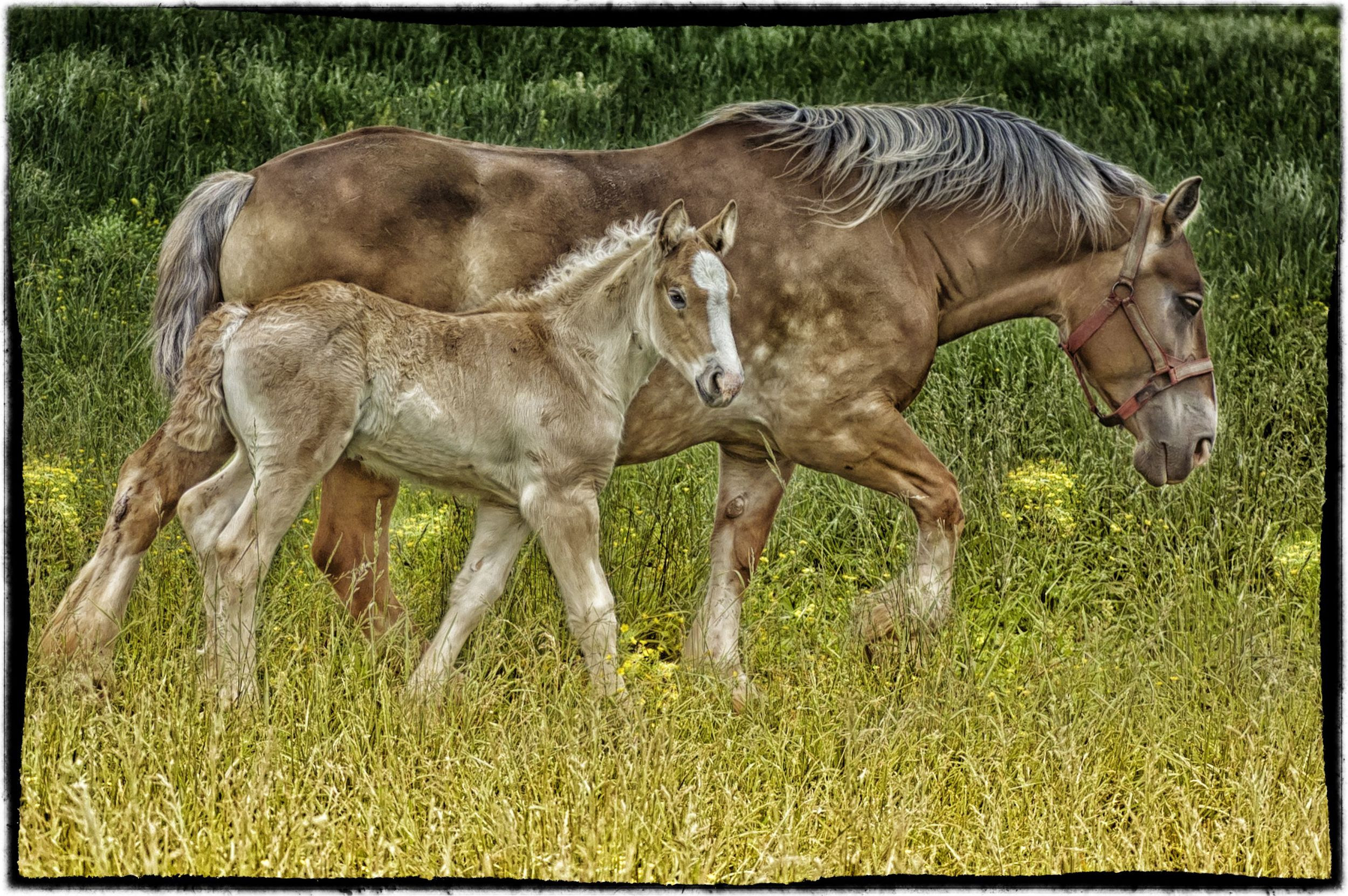 mother and foal.jpg