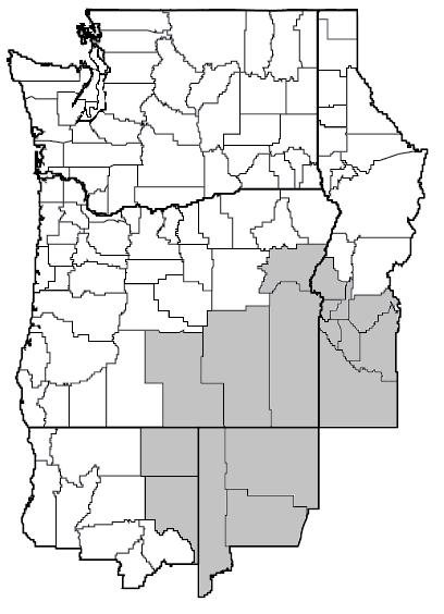 Atriplex confertifolia (Shadscale) map.png