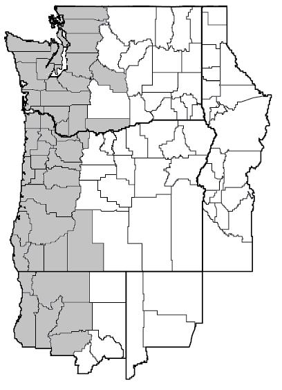 Phacelia tanacetifolia (Lacy phacelia) map.png