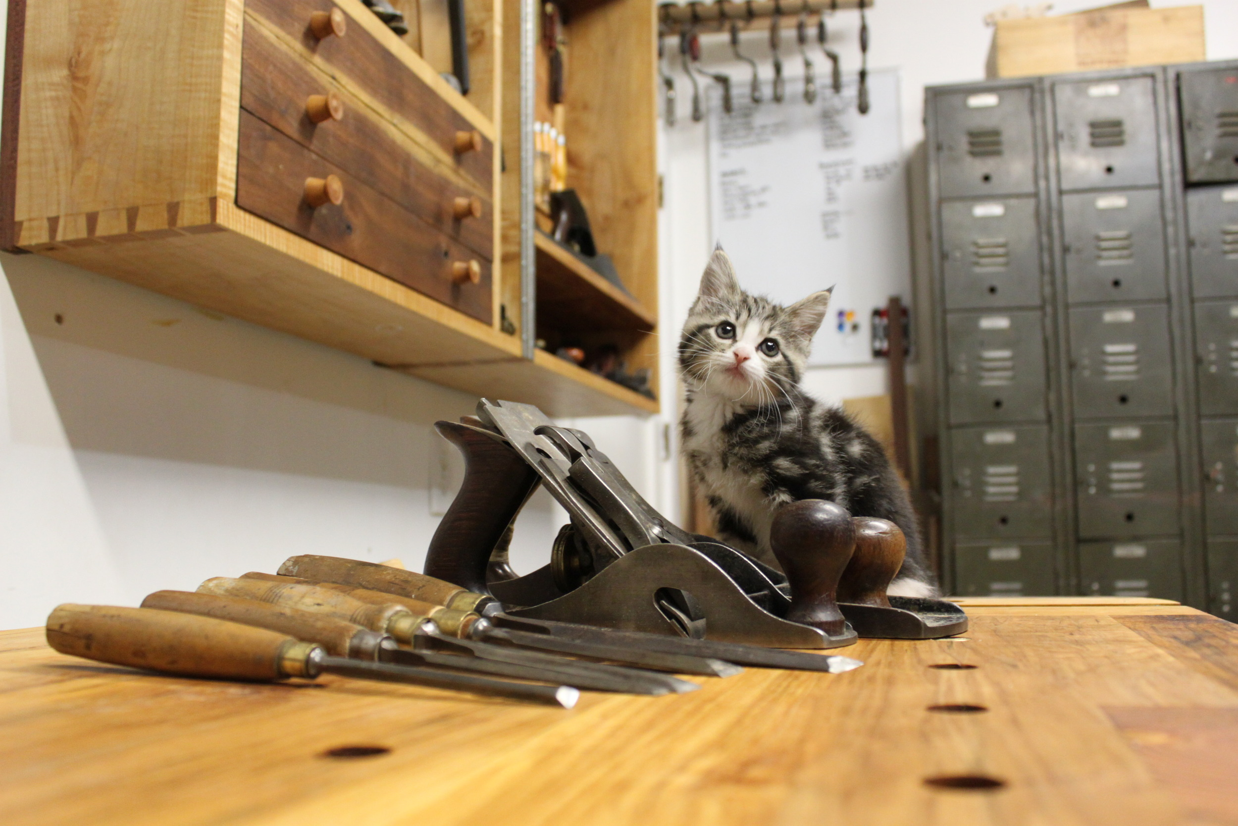 Shop kitty is ready to help!