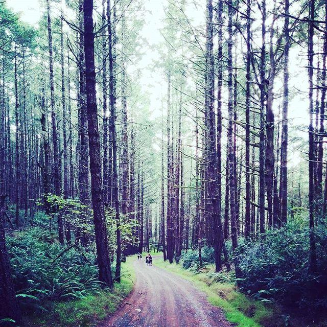 #postcaradventuring #ptreyes #california