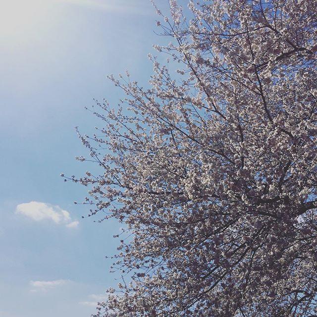 finally..... #spring