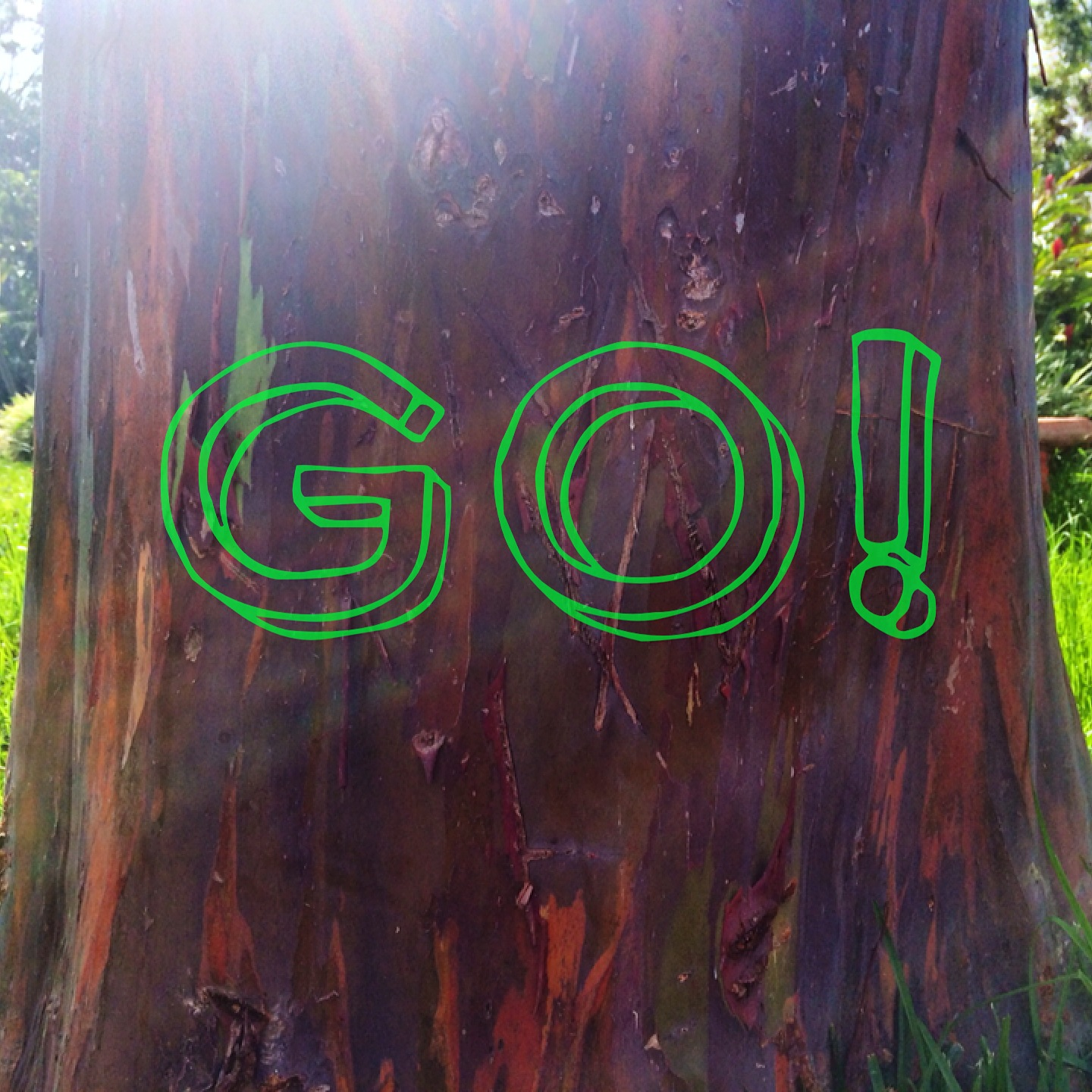 words of action framed by the colorful trunk of a rainbow eucalyptus tree found on a mountainside coffee plantation in costa rica, 2014.