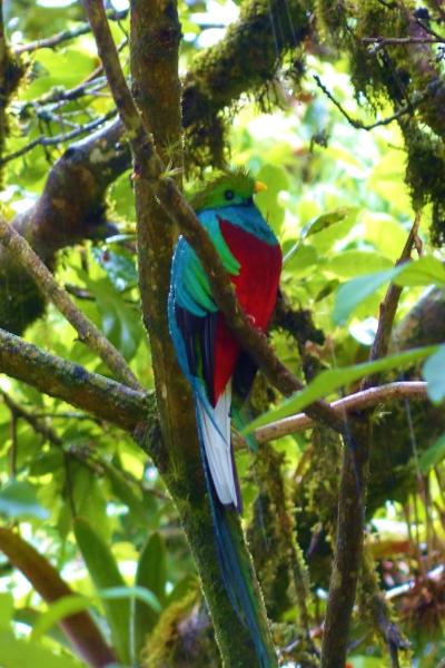 quetzal wide.JPG