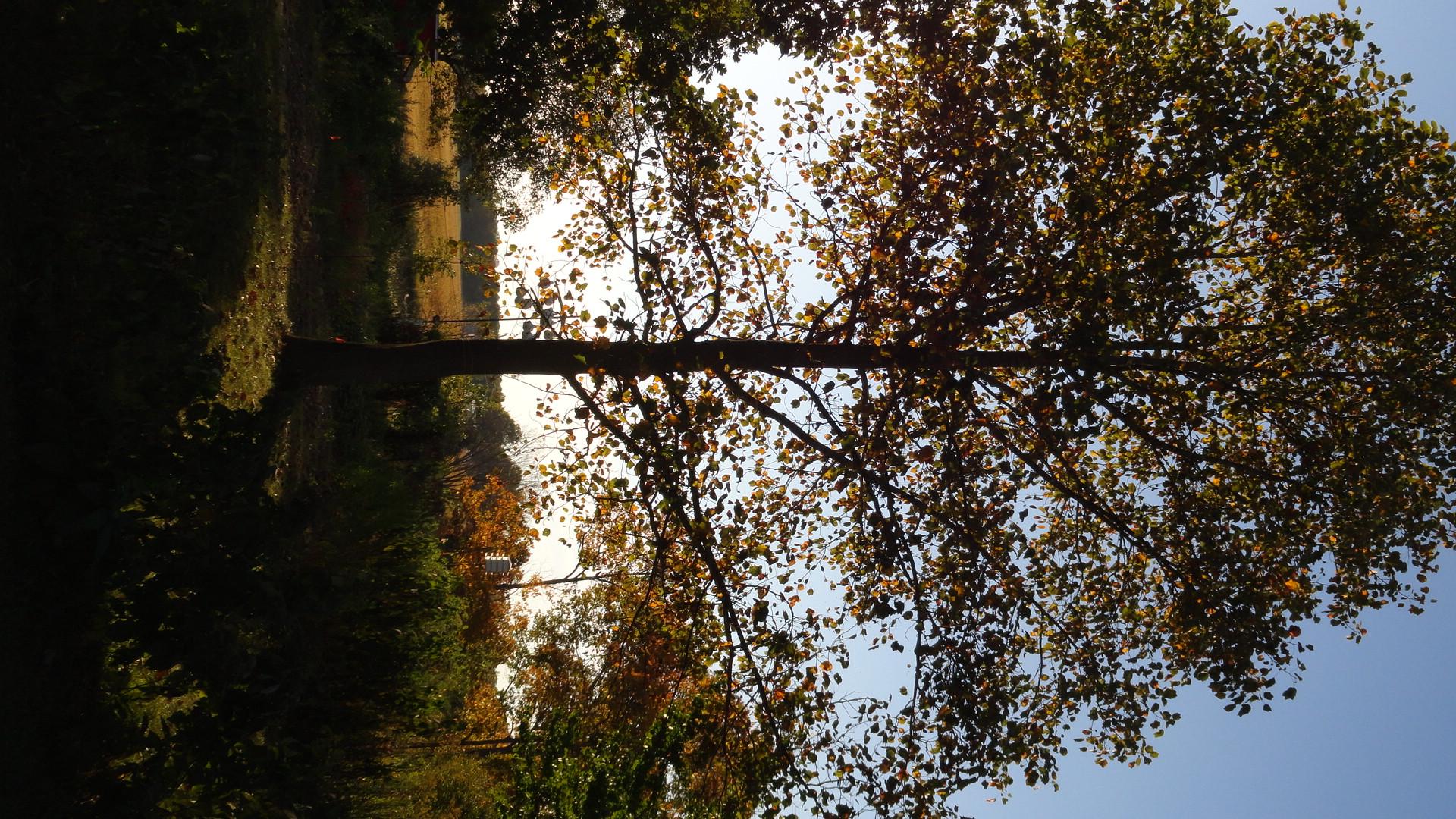tree at dusk.JPG