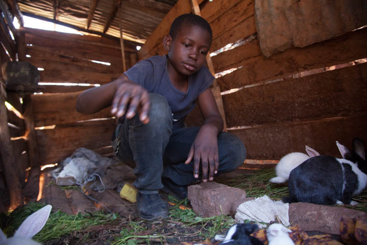 Rabbit Project inside the hutch.jpg