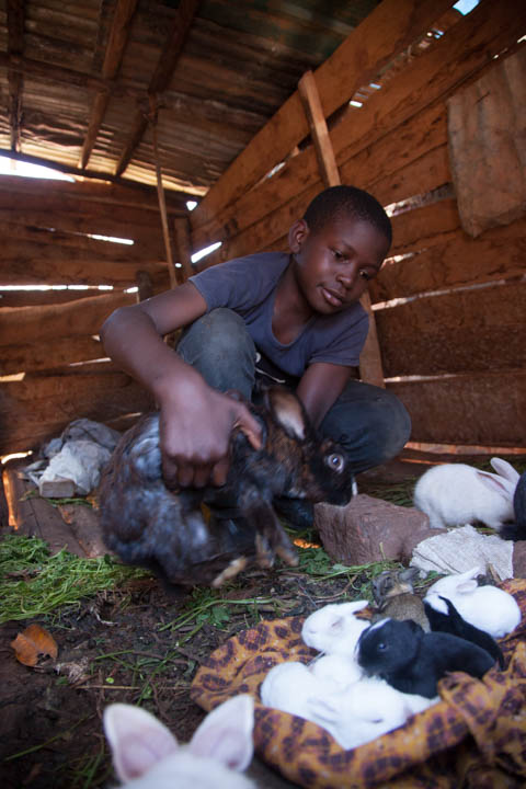 Rabbit project little babies.jpg