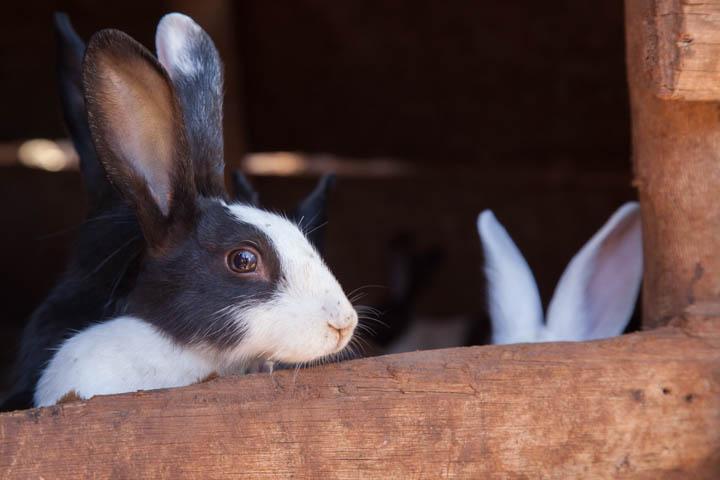 rabbit project profile.jpg