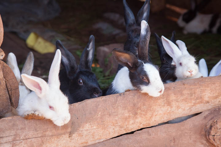 rabbit project hanging over the hutch.jpg