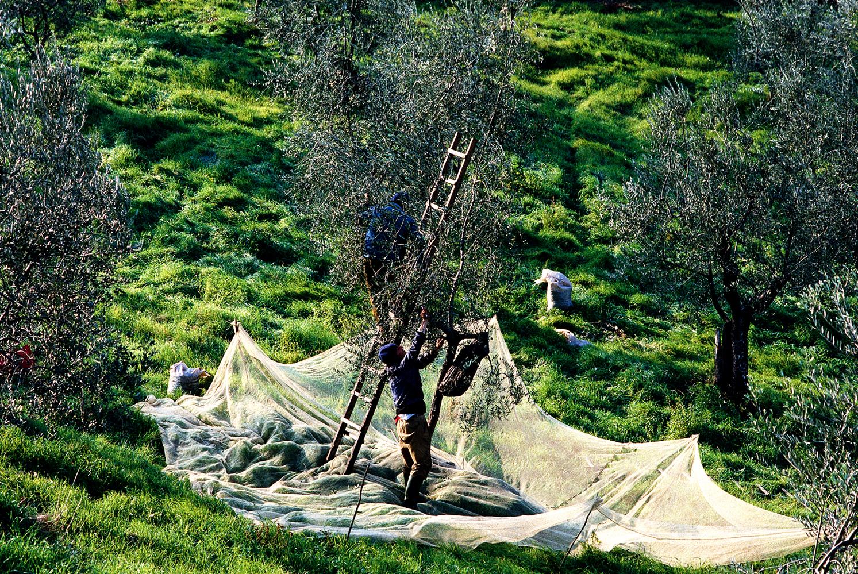 climbing pickersgreen_v2.jpg