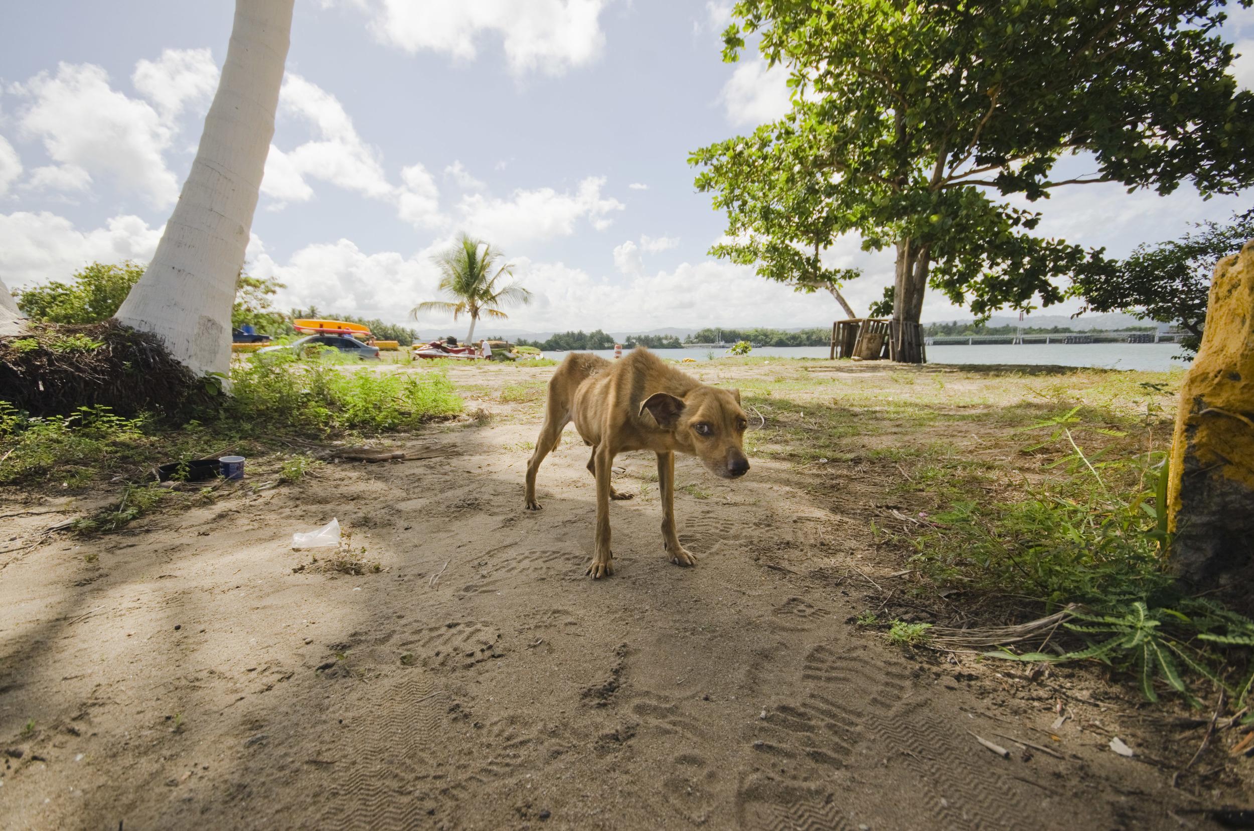 Dead Dog Beach — Sophie Gamand