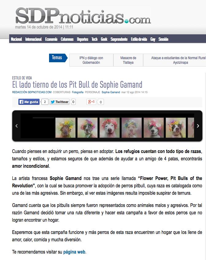FP-sdpnoticias.jpg