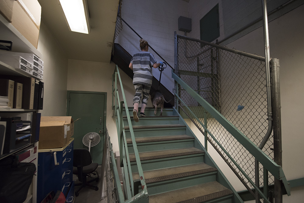 An inmate walks a dog back into his jail cell / kennel.