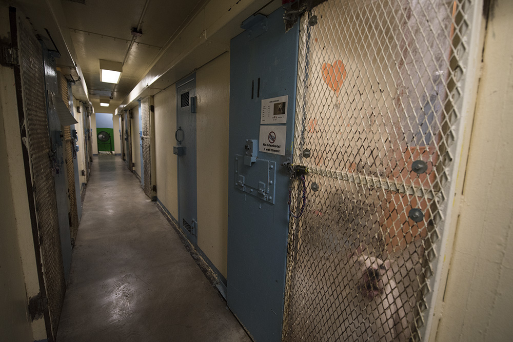 Jail cells have been reconverted into animal kennels.