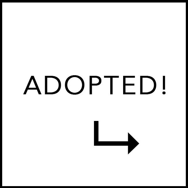 web-adopted.jpg