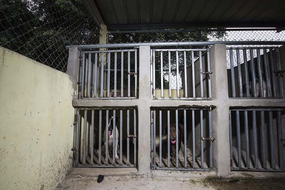 One side of the intake area: concrete cages. The bottom cages don't have access to natural light or fresh air. The top ones are used for puppies and litters.