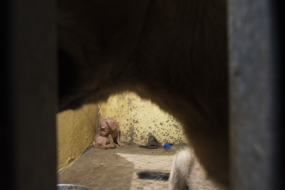 Bugsy (rescued) trying to find comfort in her uncomfortable cell.