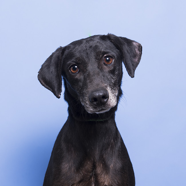 Chantal had been waiting 2 years in the adoption center. Her time was up so The Sato Project took her. She is a sweetheart!