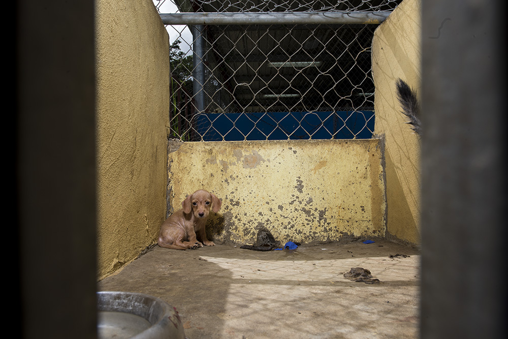 Bugsy in her kennel. She was housed with 3 other puppies and seemed shut down.