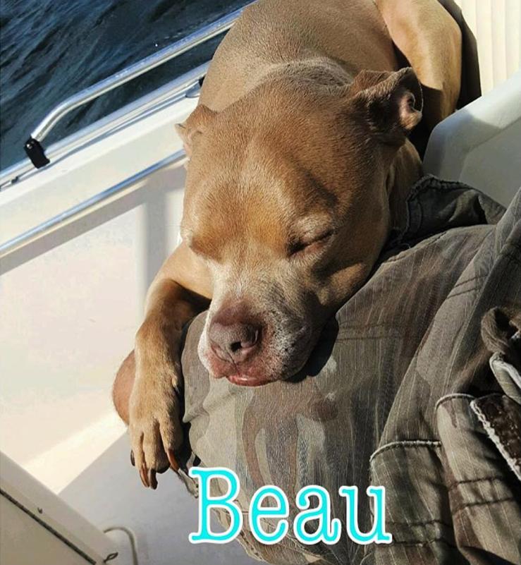 beauregard-adopted.png
