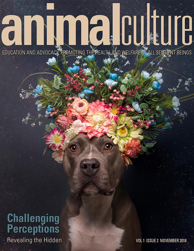 2018_Animal Culture 3.jpg