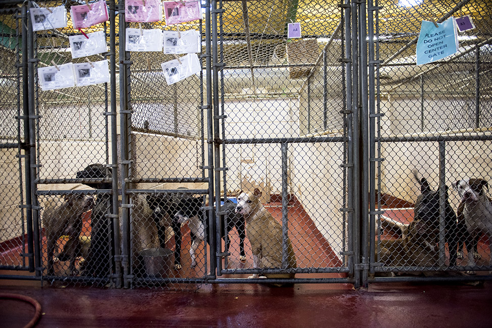 Back in 2016, I visited the shelter and was surprised to see so many dogs sharing the same kennel.