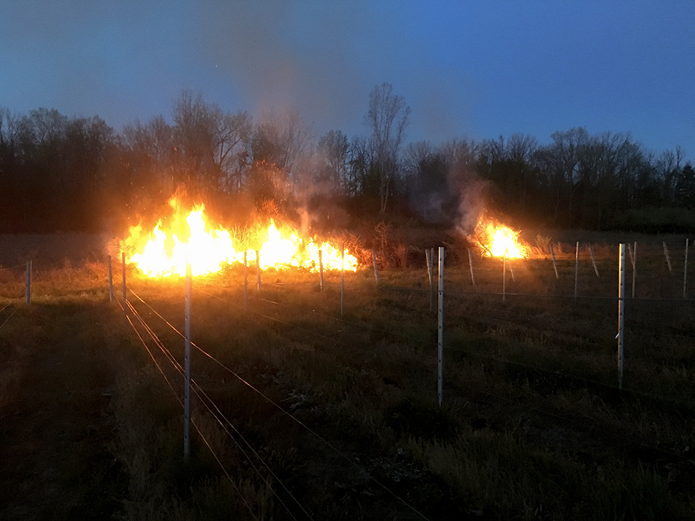 Bonfires lit in spring to deter the frost.