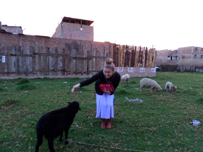 Feeding His sheep!