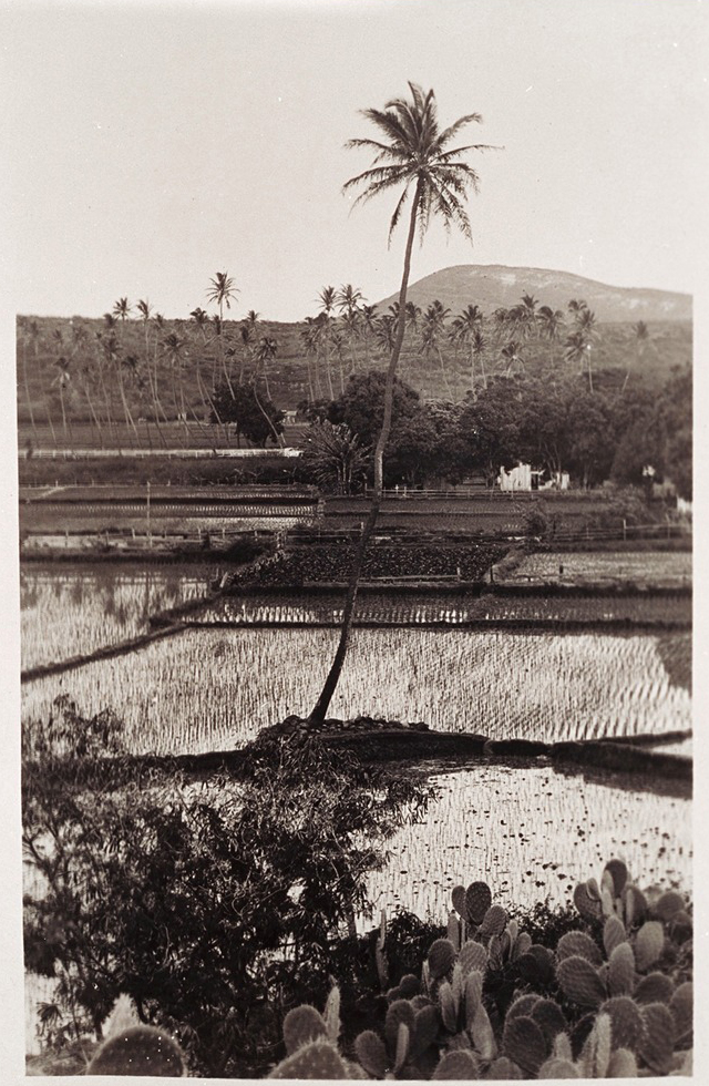 Hawaii No. 2 , 1939. Photograph, gelatin silver print. Museum of Fine Arts, Boston