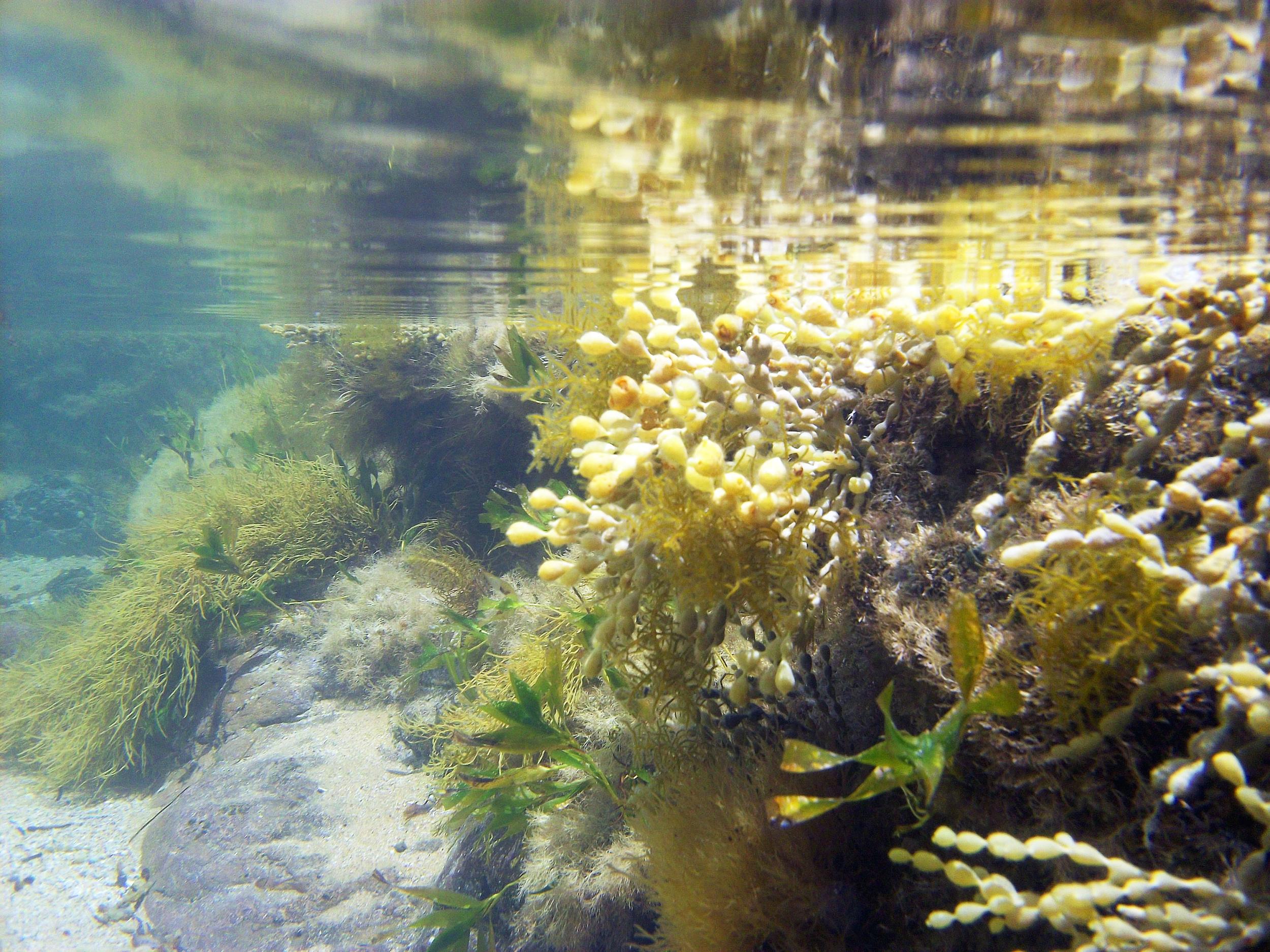 McHaffies Reef - Ventnor
