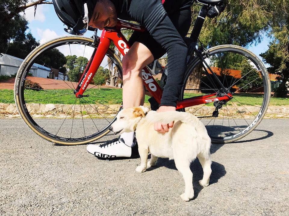 All doggos love Pat. Photo Andy 'fameandspear' Rogers - IG @fameandspear
