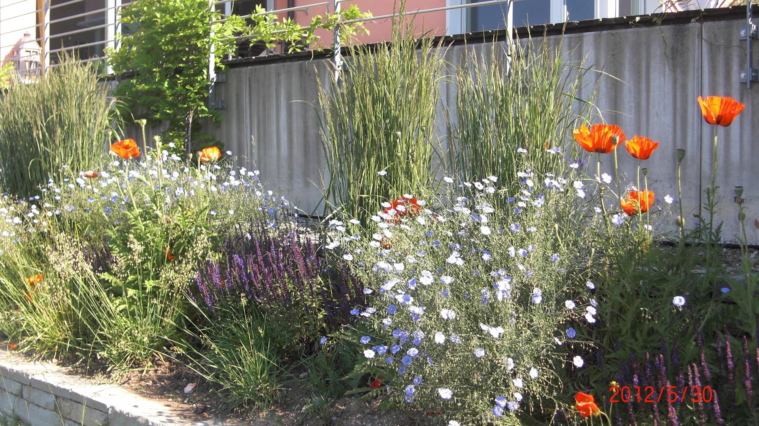 Meilen_Garten_Juni2012 (4).JPG