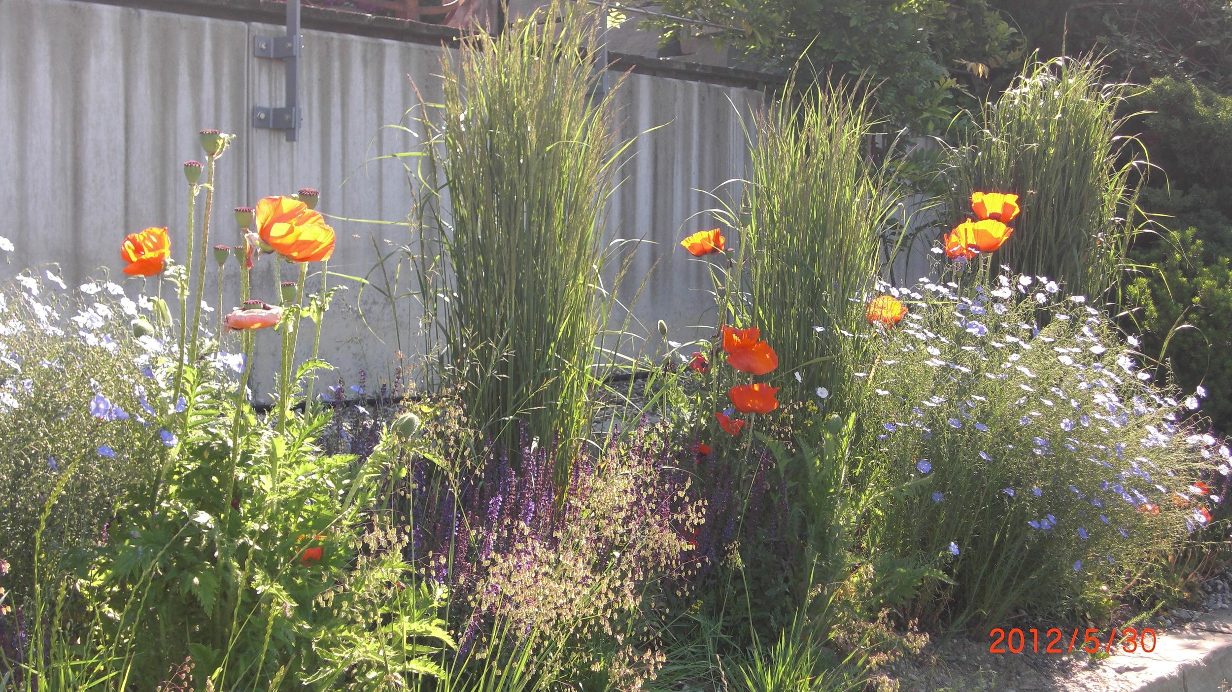 Meilen_Garten_Juni2012 (5).JPG