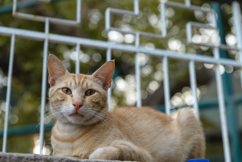 Eternele pisici din Grecia