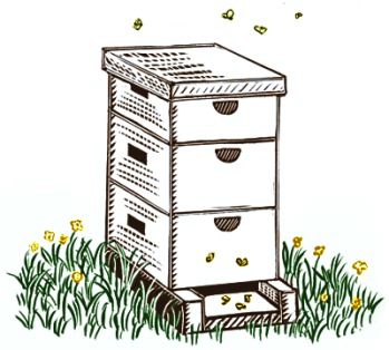 drawing_hive.jpg