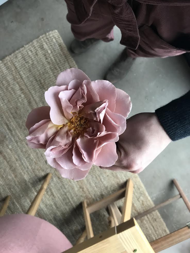 Aesme Flowers London | Cafe Latte rose