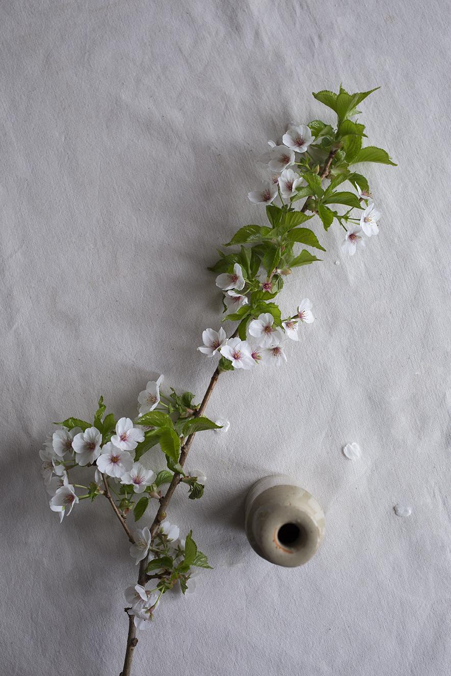 Aesme Flower Studio | Spring Blossom